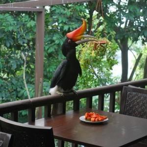 پارکپرندگان کوالالامپور (پرندۀ هورن بیل)