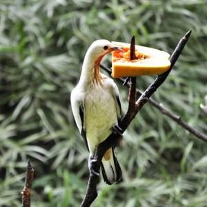 پارکپرندگان کوالالامپور (غذا دادان به پرندگان)