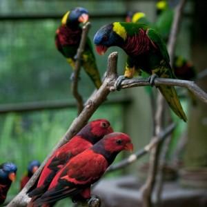 پارکپرندگان کوالالامپور