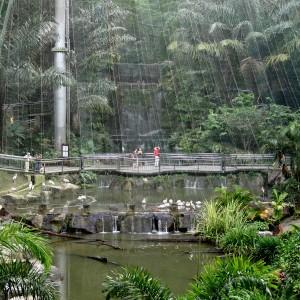 پارکپرندگان کوالالامپور (توری بر روی محوطۀ پارک)