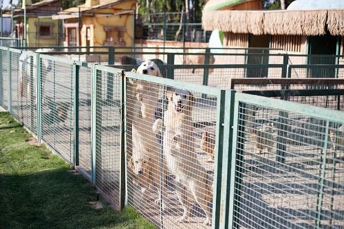 باغ وحش هتل مردان پالاس آنتالیا