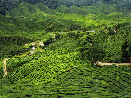 طبیعت به شدت سبز و نخل های سربرافراشته و زیبای گوا، هر گردشگری را به سوی خود حذب میکند