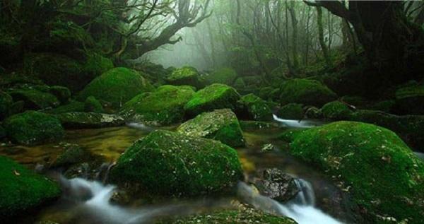 جزیره یوکوشیما ژاپن