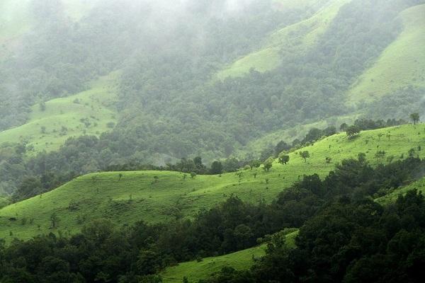 جنگل شولا، هند