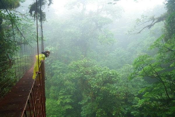 Monte Verde، کاستاریکا