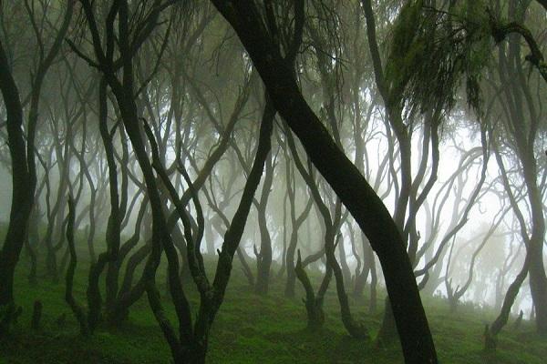 جنگل ابر کوه های سیمین، اتیوپی