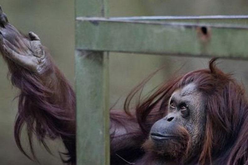باغ وحش معروف آرژانتین تعطیل شد