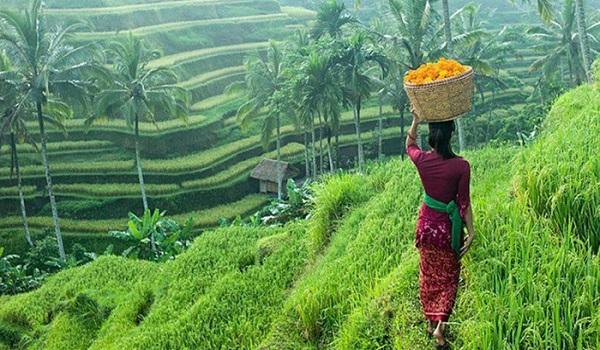 جزیره بالی زیباترین جزیره اندونزی