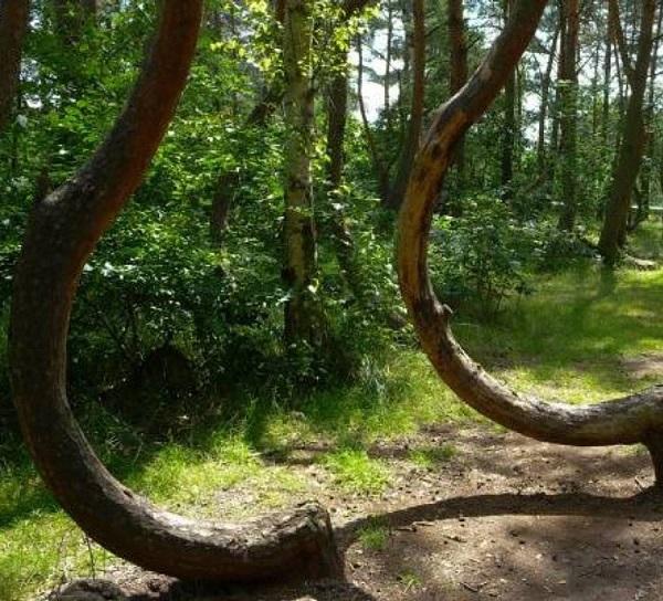 جنگل هیوباچی، رومانی