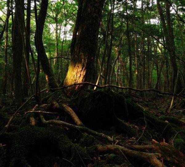 جنگل خودکشی، ژاپن