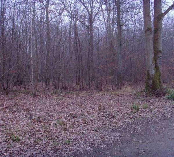 جنگل جیغ، انگلیس