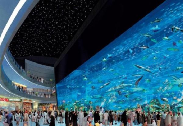 لمس زندگی در کف اقیانوس در آکواریوم دبی