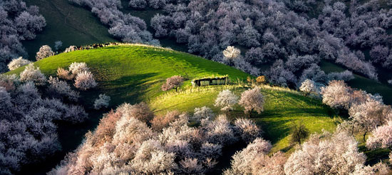 زیبایی دره زردآلو نفستان را حبس میکند