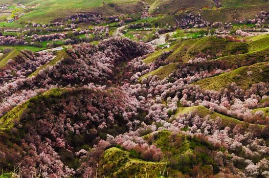 دره زردآلو
