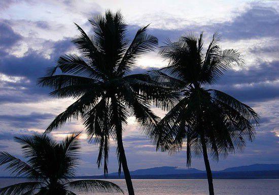 جزیره اپو (Apo Island)