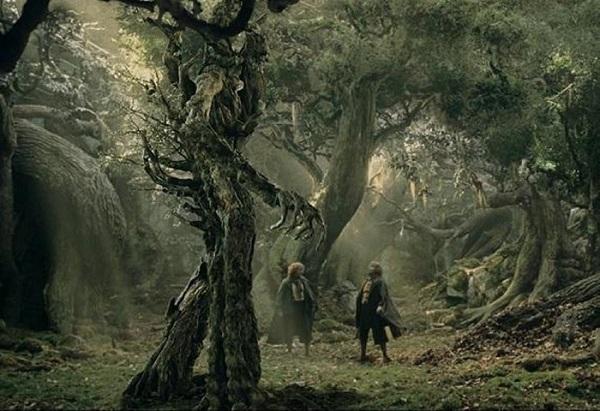 درخت انسان نمای عجیب در بلغارستان