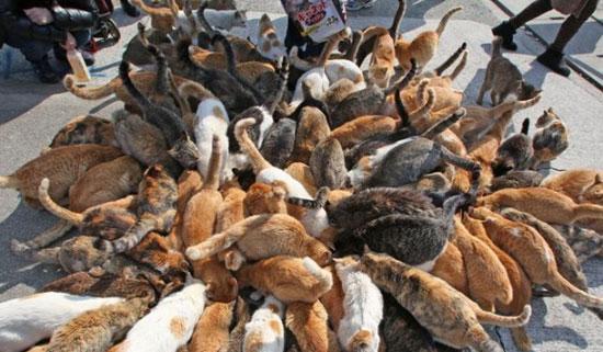 جزیره گربهها ، پیشنهادی برای گربه دوستان