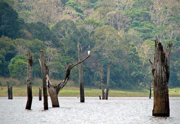 دریاچه پریار، هند