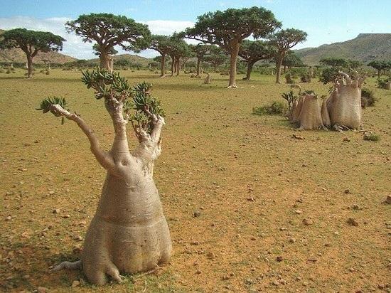سوکوترا ، بیگانه ترین نقطه روی زمین