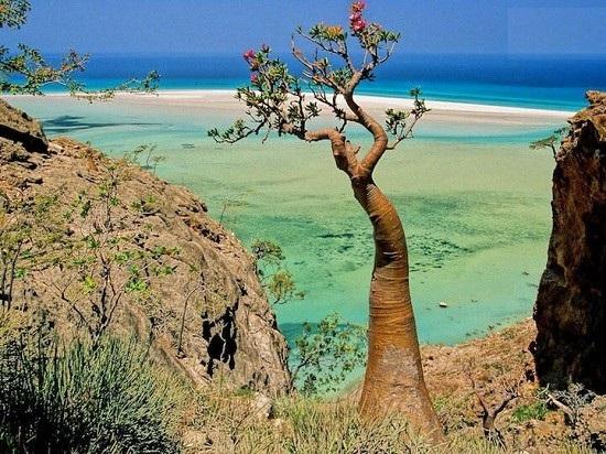 جزیره بیگانه ، سوکوترا