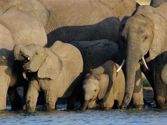 پارک ملی هوانگ، زیمبابوه