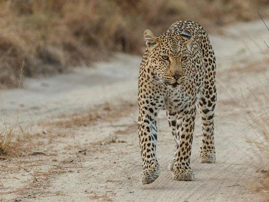 منطقه حفاظت شده سابی سندز، آفریقای جنوبی