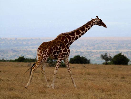 منطقه حفاظت شده سولیو، کنیا