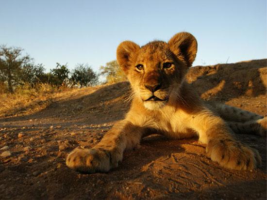 پارک ملی کروگر، آفریقای جنوبی