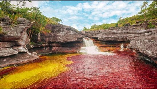 رودخانه کانیو کریستالس، کلمبیا (Caño Cristales River, Colombia)