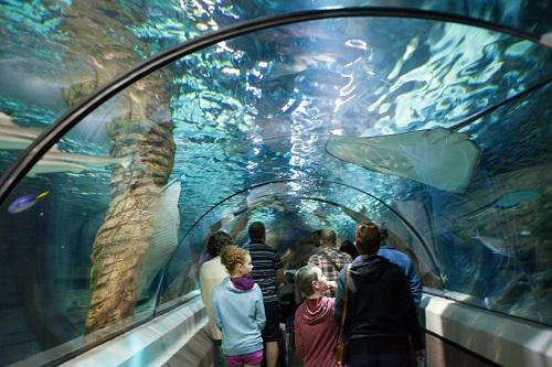 جاذبه های گردشگری تایلند ، دنیای زیر آب پاتایا