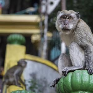 غارهای باتو (میمون ها در مسیر معبد)