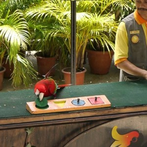 پارکپرندگان کوالالامپور (شوی پرندگان)