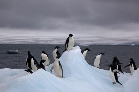قاره قطب جنوب از عجایب طبیعی جهان