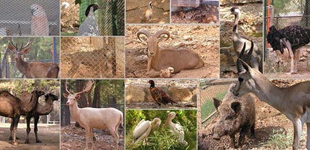باغ وحش آنتالیا، مسافران و توریست های اروپایی زیادی را به خود جذب می کند