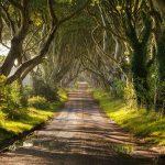 معروف ترین درختان جهان / تصاویر