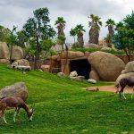 باغ وحش رویایی در والنسیا / تصاویر
