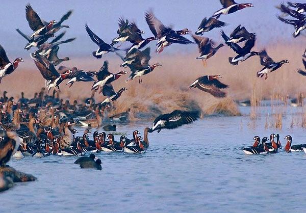 آشوراده ، بزرگ ترین جزیره ایرانی دریای خزر