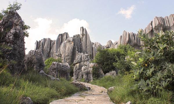 جنگل شگفت انگیز سنگی در چین