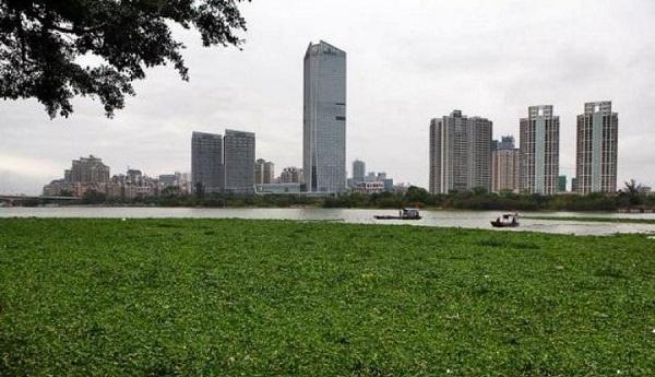 رودخانه Jingang در Fuzhou، مرکز استان فوجیان در جنوب شرقی چین