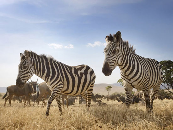 منطقه حفاظت شده نگورونگورو، تانزانیا