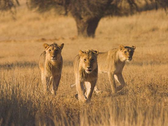 منطقه حفاظت شده کالاهاری مرکزی، بوتسوانا