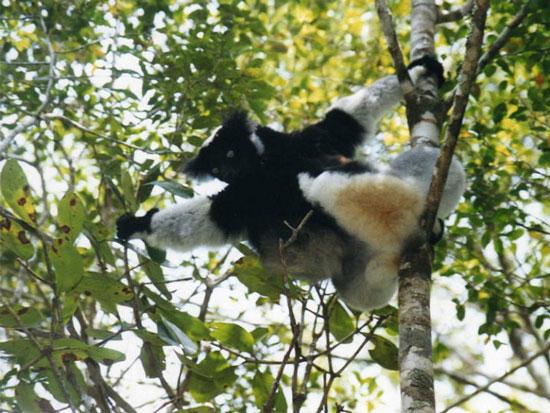 منطقه حفاظت شده پرینت، ماداگاسکار