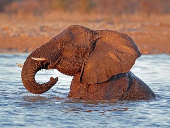 پارک ملی اتوشا، نامیبیا
