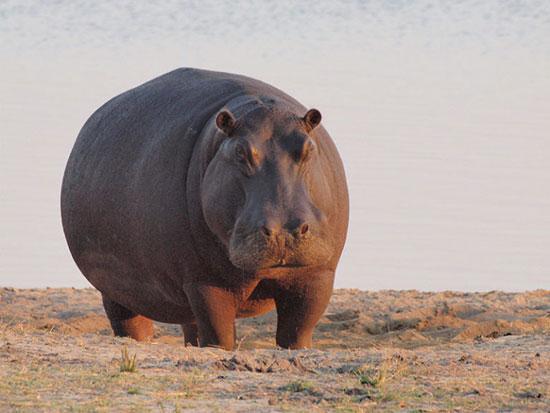 پارک ملی چوب، بوتسوانا