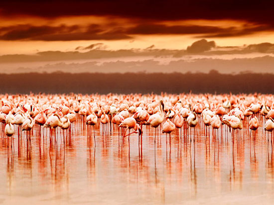 پارک ملی دریاچه ی ناکورو، کنیا