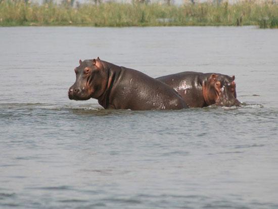 پارک ملی لور زامبزی، زامبیا