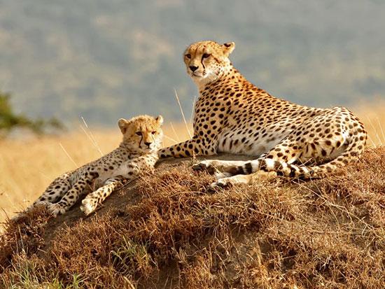 منطقه طبیعی حفاظت شده ماسی مارا، کنیا