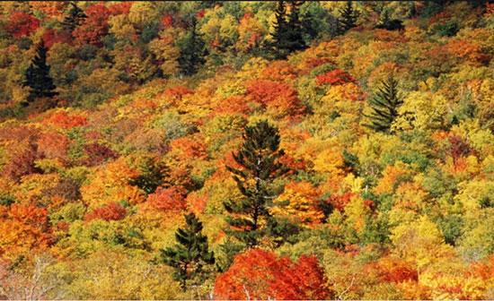 کوه های سفید، نیوهمشیر، آمریکا (White Mountains, New Hampshire)