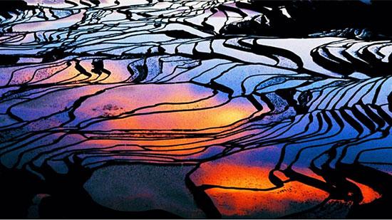 تریس رایس فیلد، یائونیانگ، چین (Terrace rice fields, Yuanyang country, China)
