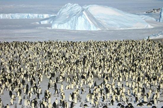 سفر به خلیج گاتا با بیش از شش هزار پنگوئن